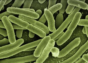 rischio biologico - batteri - legionella - coliformi