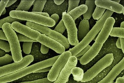 batteri rischio biologico legionella escherichia